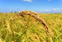 BBI JU PROMINENT project: Boosting plant protein in the diet to fuel human and environmental health