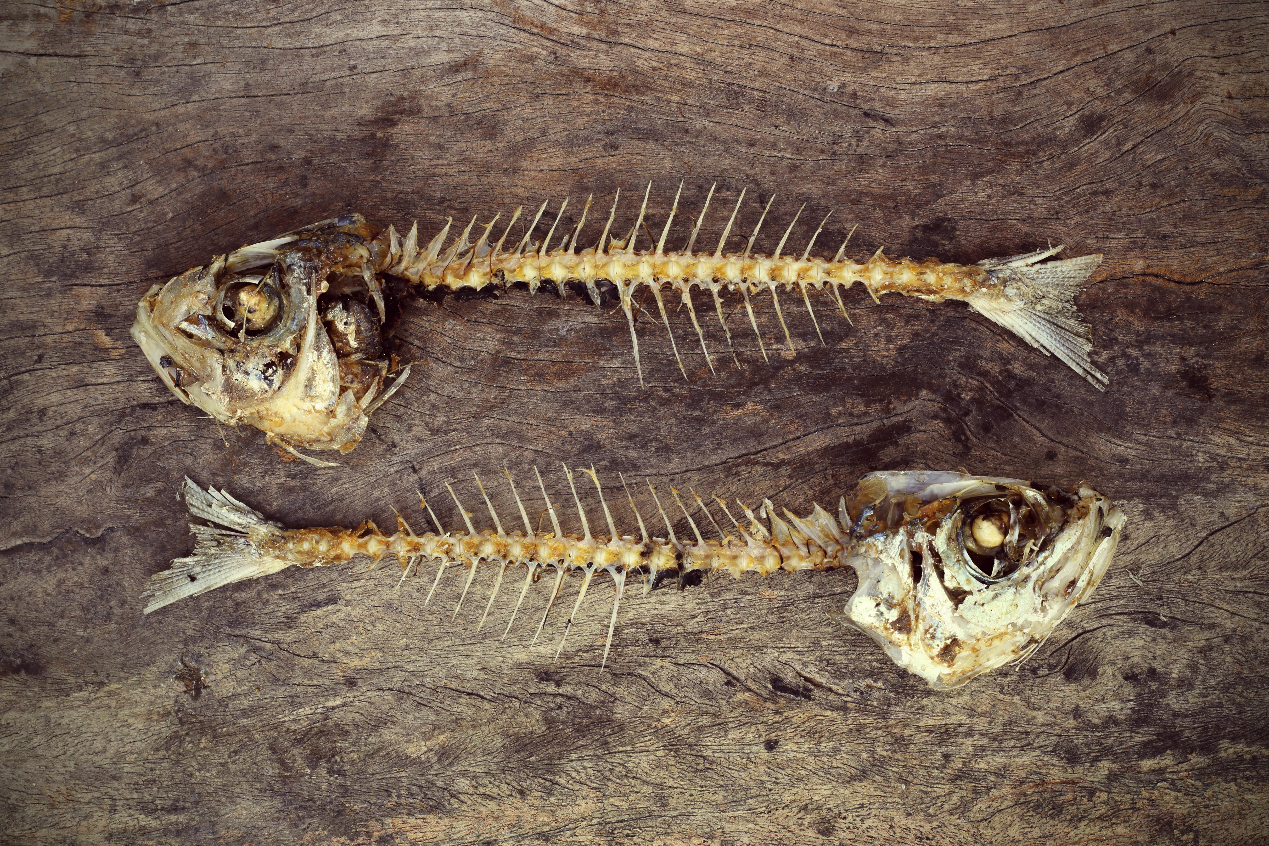 BBI JU AQUABIOPRO-FIT project: Bringing fish heads and bones back to the dinner table