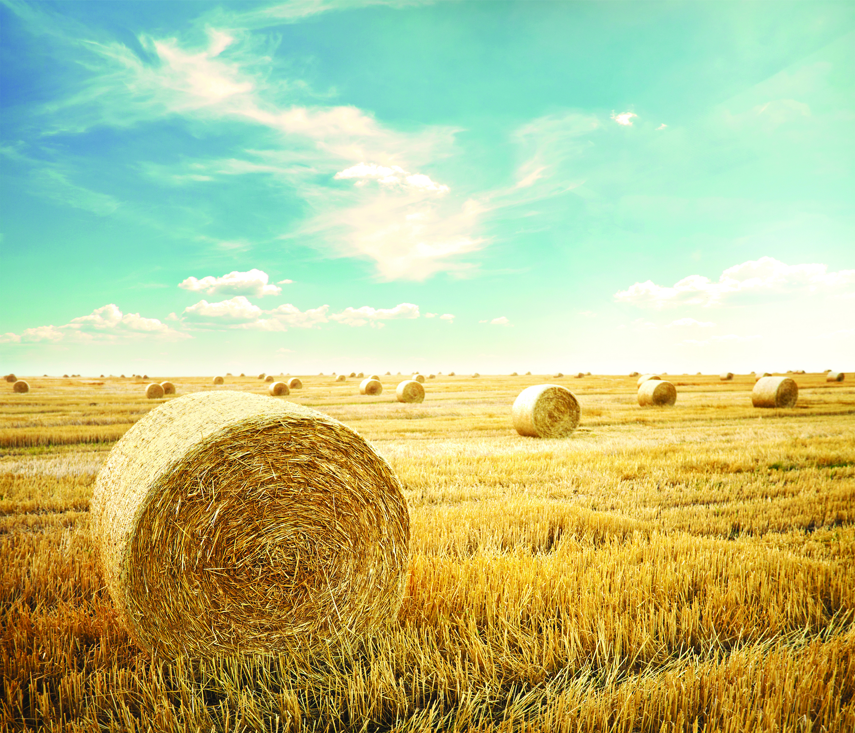 OPTISOCHEM is a BBI JU project converting wheat straw into bio-based chemicals.