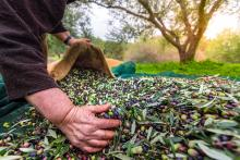 BBI JU AGRIMAX project: From agricultural and food-processing waste to bio-products