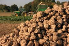 BBI JU PULP2VALUE project: Extracting high value products from sugar beet pulp