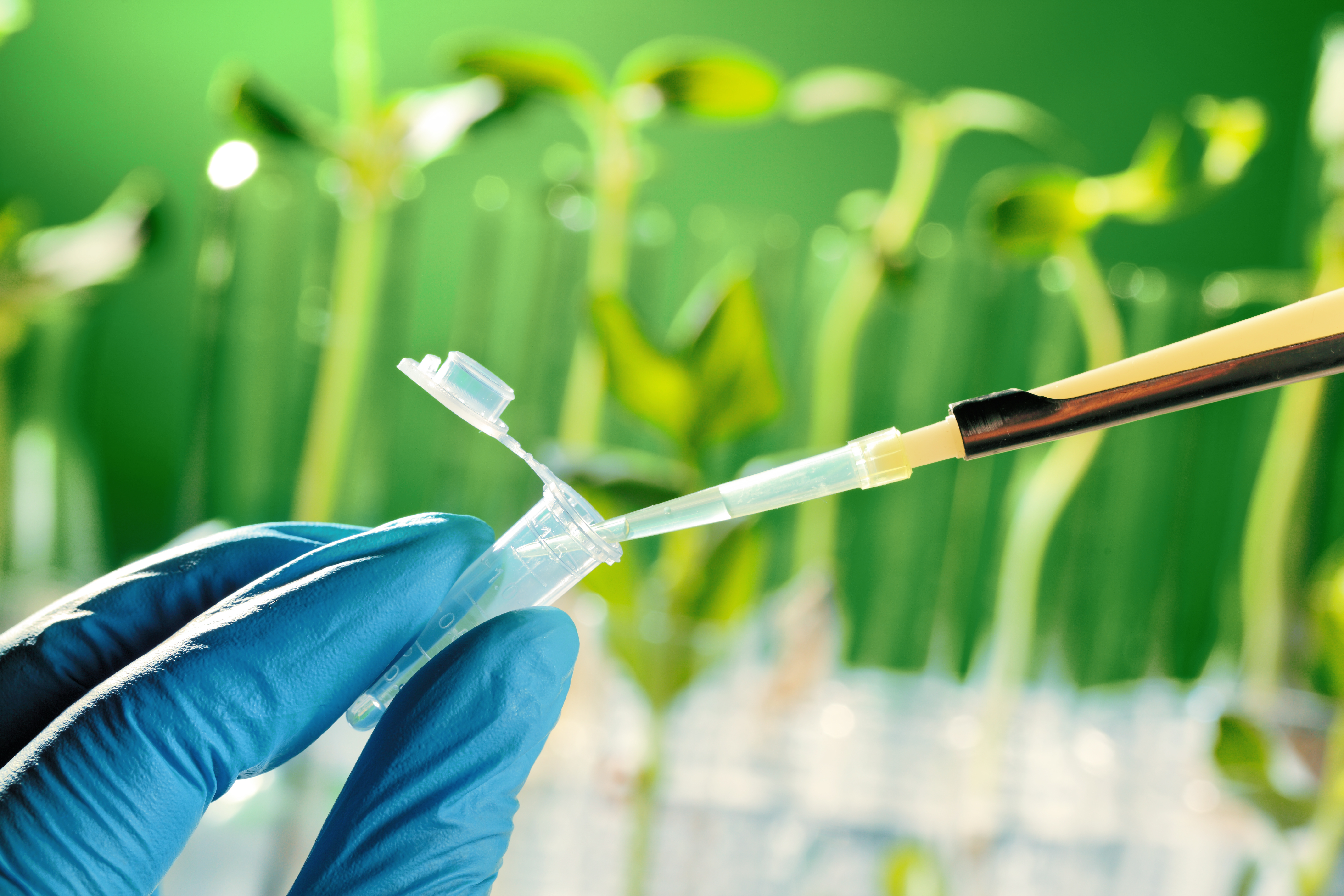 BBI JU GreenProtein project: Novel protein product offers taste of success